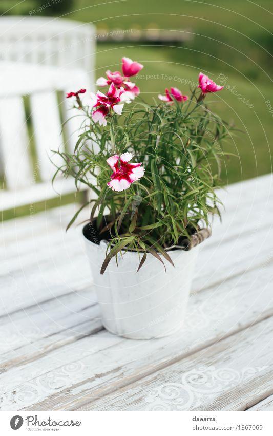 Blumensommer Natur Pflanze schön Sommer Sonne Blatt Freude Leben Gras Stil Spielen Lifestyle Freiheit Design Freizeit & Hobby