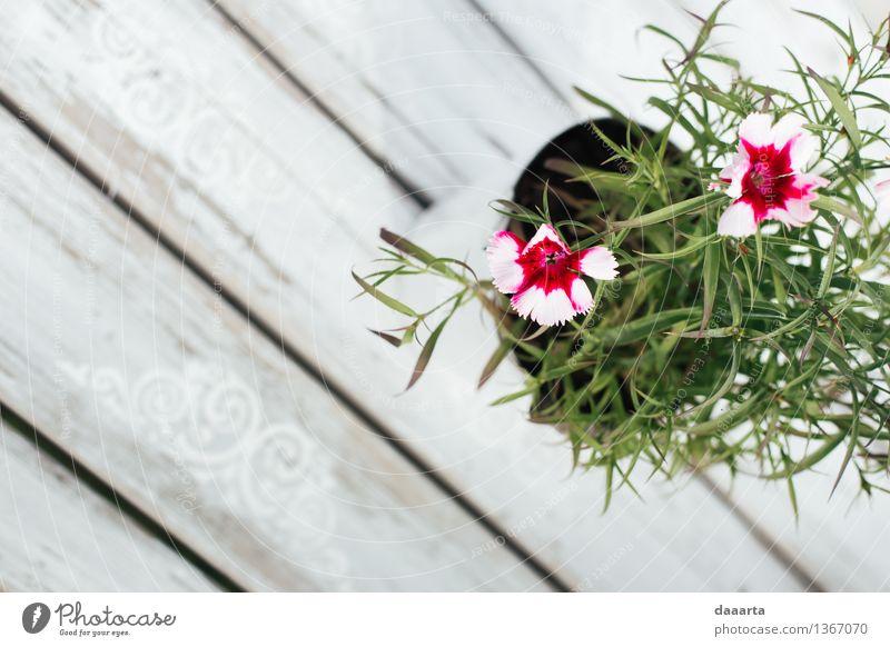 Blumen setzen Natur Pflanze schön Sommer Sonne Blatt Freude Leben Innenarchitektur Gras feminin Stil Lifestyle Freiheit Party