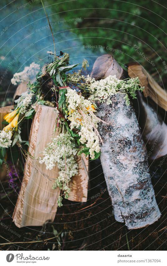 Natur Sommer Landschaft Freude Wald Leben Blüte Gefühle Stil Holz Spielen Lifestyle Freiheit Stimmung Design Park