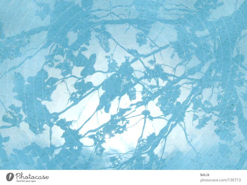 JAPANISCHE GEWÄSSER Himmel Wasser blau Blatt dunkel hell Hintergrundbild Ast Muster türkis Vorhang Schattenspiel azurblau