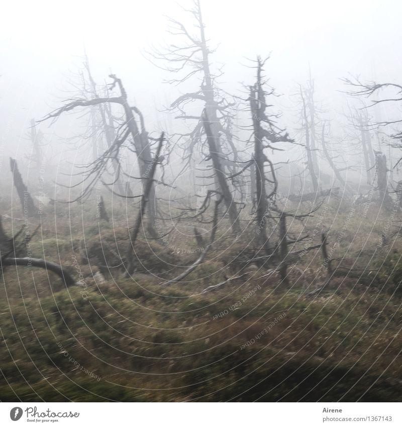 Gestalten Baum Einsamkeit Landschaft dunkel Wald Berge u. Gebirge Tod grau wild Wetter Nebel Angst gefährlich bedrohlich Vergänglichkeit gruselig