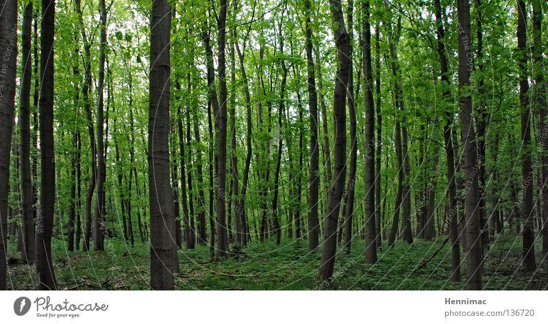 Deutscher Busch Wald Baum grün Blatt dunkel Frühling Unterholz Laubbaum Baumstamm Baumrinde geschlossen Außenaufnahme