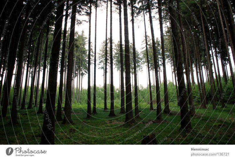 Hirschrevier Wald Baum dunkel grün Nadelwald Tanne Fichte Baumstamm Waldlichtung Licht Stimmung dunkelgrün wandern Jagd Außenaufnahme