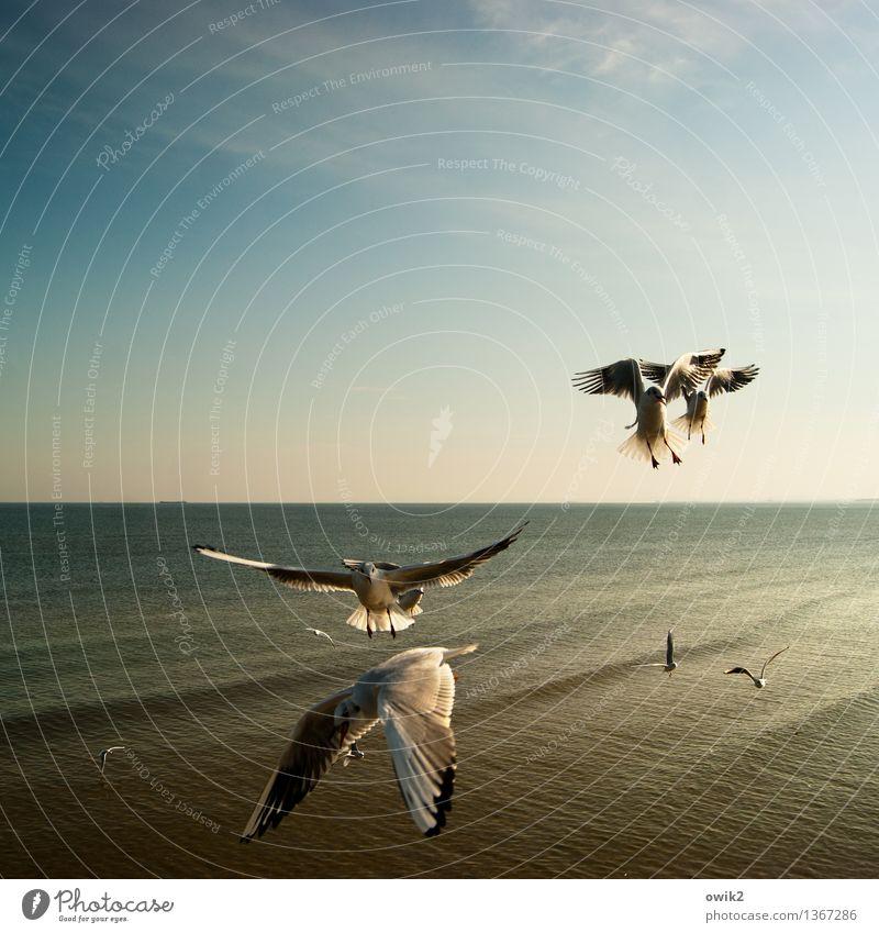 Armada Umwelt Natur Landschaft Wasser Himmel Horizont Klima Schönes Wetter Ostsee Vogel Möwe Schwarm fliegen Zusammensein maritim Stimmung viele flattern