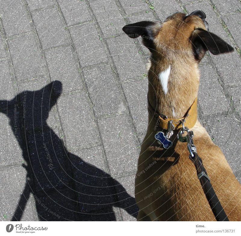 Peilung auf NNO Hund Nervosität Gemälde Halsband Wachsamkeit hören Geruch Konzentration zielen Säugetier Kommunizieren Schatten Seil Gehwegsteine Pflasterung