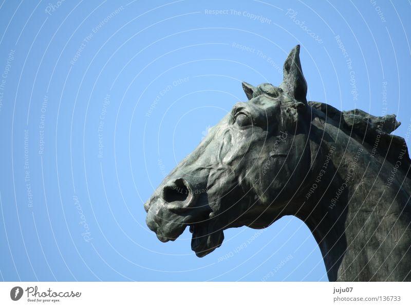 tierisch Pferd Statue Skulptur wiehern Rom Tier blau kupfer