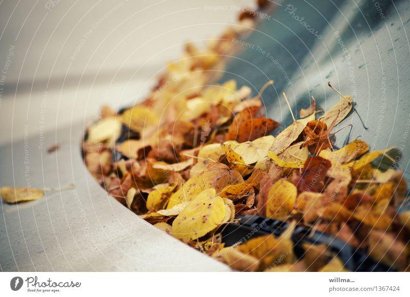 herbstknöllchen Blatt gelb Herbst braun PKW Herbstlaub silber herbstlich parken Windschutzscheibe Scheibenwischer