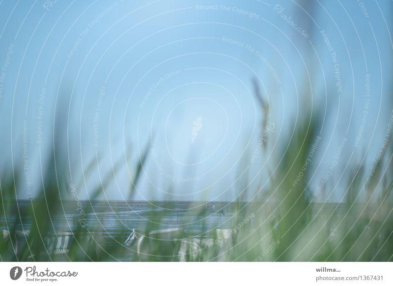 Am Strand von  Cuxhaven Ferien & Urlaub & Reisen Sommer Sommerurlaub Wolkenloser Himmel Dünengras Küste Nordsee Meer Ebbe blau grün Strandkorb Nordseestrand See