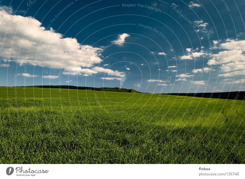 Grün und Blau... Ackerbau Feld grün Landschaft Natur malerisch Menschenleer himmelblau Weitwinkel Zentralperspektive Wolkenhimmel Schönes Wetter Wolkenformation