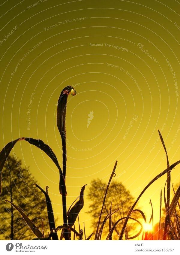 early morning | tau Stimmung Körperhaltung Lampe Wiese Feld Ferne Sonnenaufgang Morgen Baum Baumkrone Blatt Horizont Silhouette schwarz Schatten verdunkeln