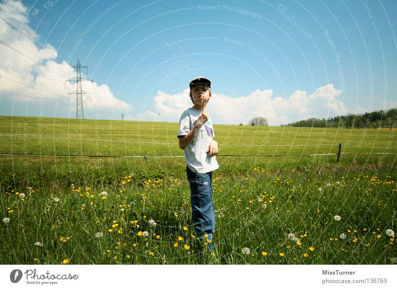 Pusten Spielen Kind maskulin Junge Kindheit 1 Mensch Natur Landschaft Himmel Wolken Frühling Blume Gras Wiese Feld T-Shirt Jeanshose Mütze Blühend Fröhlichkeit