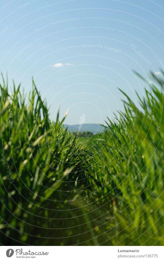 Wandermeile Natur schön Himmel Pflanze ruhig Wolken Ferne Gras Frühling Wege & Pfade Feld Wetter frei Horizont frisch Hoffnung
