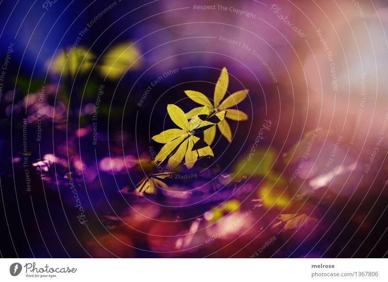 im Zauberwald elegant Stil Natur Landschaft Erde Herbst Schönes Wetter Gras Moos Grünpflanze Wildpflanze Waldboden Blatt Zweige u. Äste Lichtspiel Lichteinfall