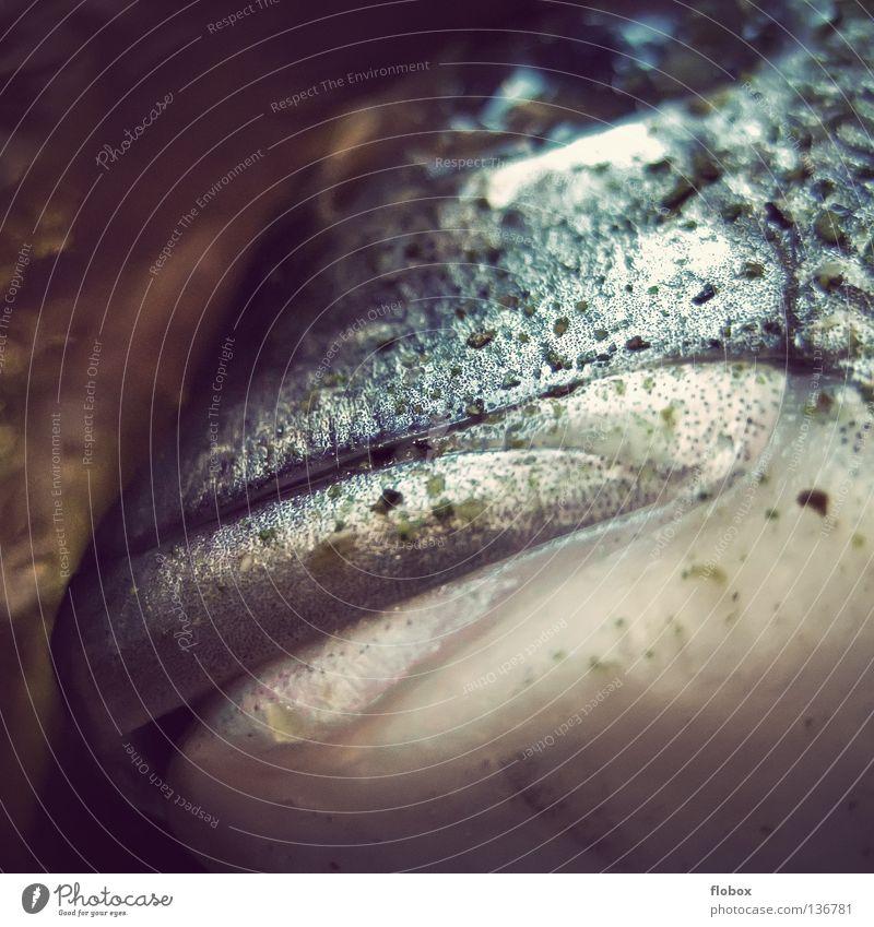 Großmaul.. alt Wasser grün Meer Tier Tod kalt Lebensmittel Mund frisch Ernährung schlafen Fisch Lebewesen genießen Angeln
