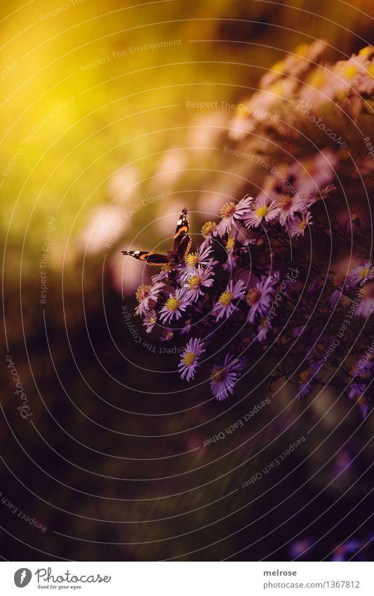 Fang das Licht Natur Stadt Pflanze schön weiß Sonne Erholung Blume Blatt Tier gelb Blüte Herbst Stil Garten braun