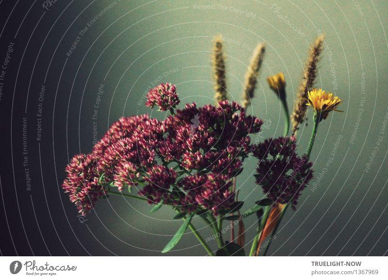 Traum | ...im frühen Morgenlicht Herbst Blume Gras Blatt Blüte Dekoration & Verzierung Blumenstrauß ästhetisch dunkel Freundlichkeit natürlich positiv Wärme