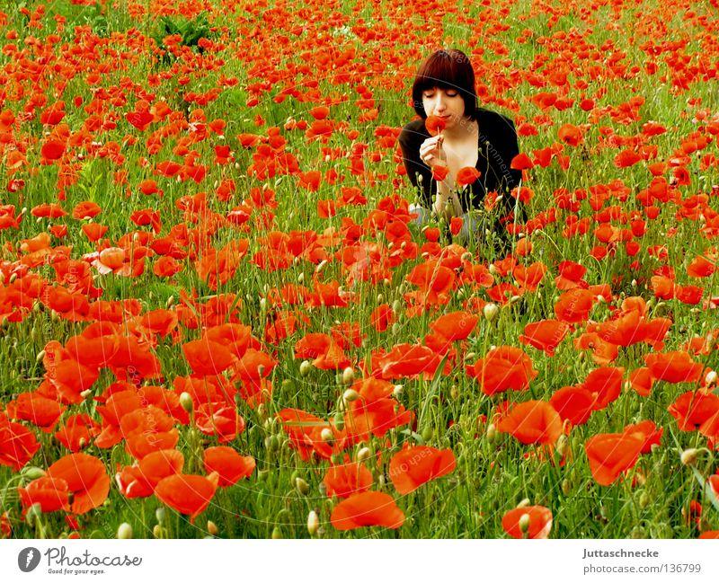 Sommer! Frau Natur rot Blume träumen Feld Romantik Mitte Mohn genießen Geruch verträumt hocken Mohnfeld zuletzt