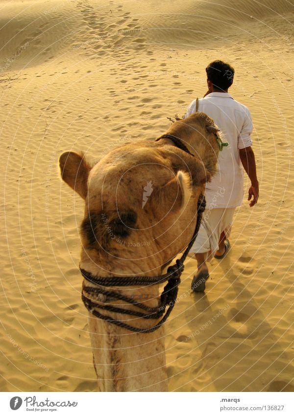 Ausritt Mensch Mann weiß Sommer gelb Sand wandern Wüste heiß trocken Indien Nomaden Reitsport Kamel Karavane