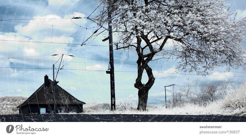 Bahnhofsleben (schon wieder IR) Himmel blau Ferien & Urlaub & Reisen weiß Baum Wolken schwarz Freiheit außergewöhnlich Eisenbahn Bodenbelag Bahnhof Surrealismus fremd Infrarotaufnahme Holz