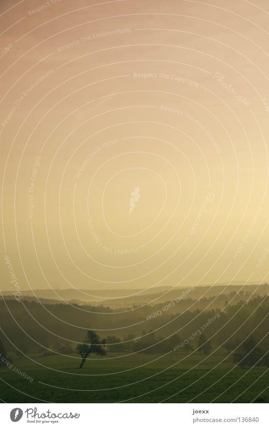 Morgenrot - ein Photo droht. Angst Baum Baumreihe Bodennebel dunkel Erholung Erinnerung Tau grauenvoll gruselig Herbst Hügel Idylle Licht Nebel Nebelwand unklar
