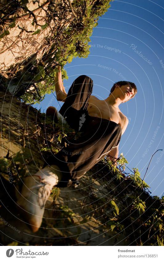 Kletterpflanze Himmel Jugendliche Pflanze Freude Erholung Bewegung springen Mauer Zufriedenheit elegant frei ästhetisch verrückt Aktion Coolness Klettern