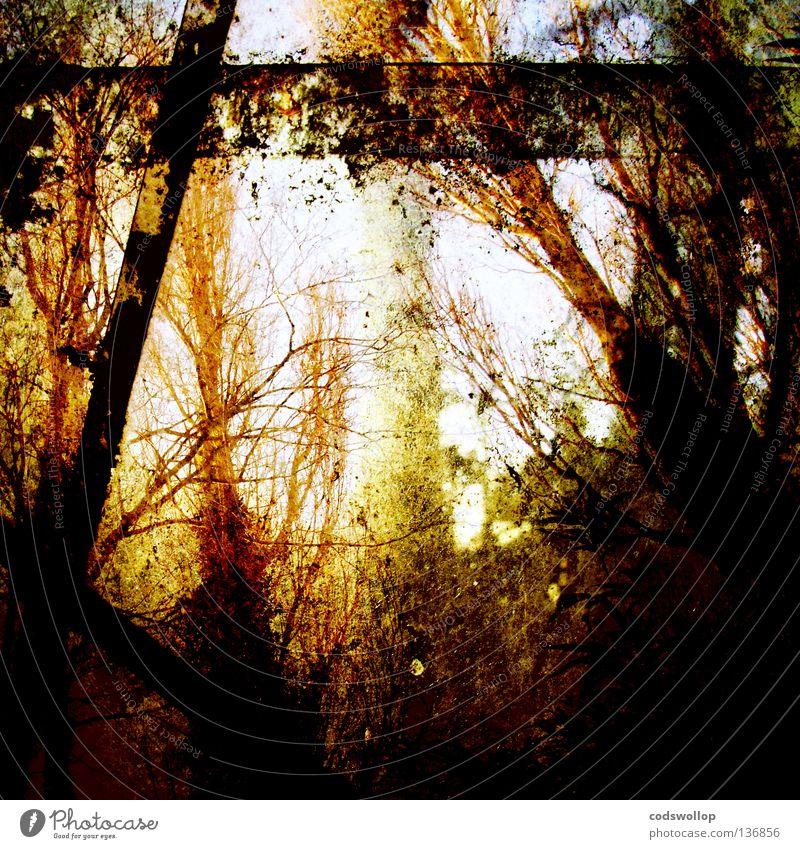 treibhaus Baum grün Sommer Blatt Wald Garten Ast Bach Herbstlaub Sumpf Gewächshaus Sonnenlicht Holzmehl