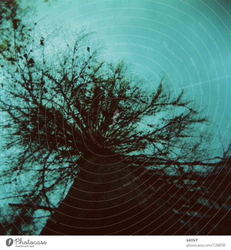 Vertrocknet Baum Blatt Umwelt dunkel kalt Herbst gefährlich Schönes Wetter Quadrat Baumstamm bizarr Sorge Wolkenloser Himmel Reue Waldrand Holga