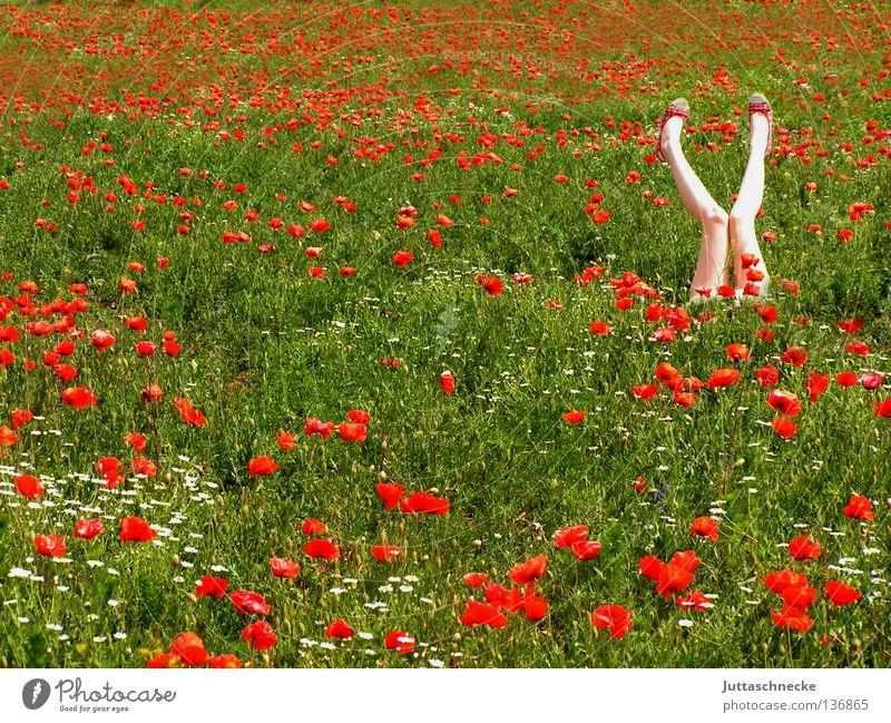 Yoga Frau Natur rot Sommer Blume Freude Beine träumen Gesundheit Feld Romantik Mitte Mohn Mensch Turnen Mohnfeld