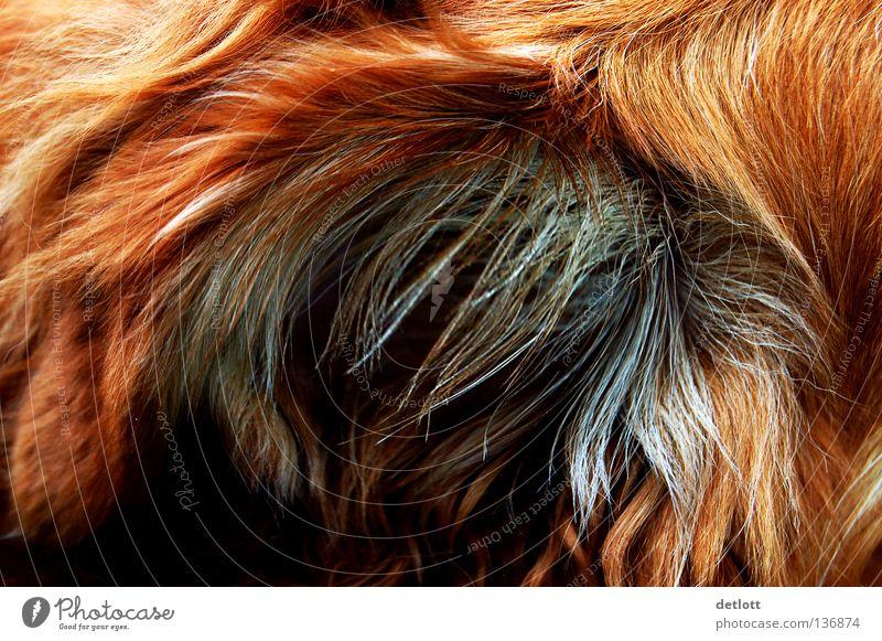 grimling? Fell rot braun schwarz Hund Katze geheimnisvoll Tier Säugetier Detailaufnahme Haare & Frisuren skuril