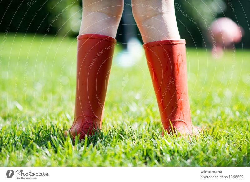 Mensch Kind Sonne Freude Mädchen Frühling Gras Garten Freiheit Regen Erde Kindheit Wassertropfen Idee Gummistiefel 3-8 Jahre