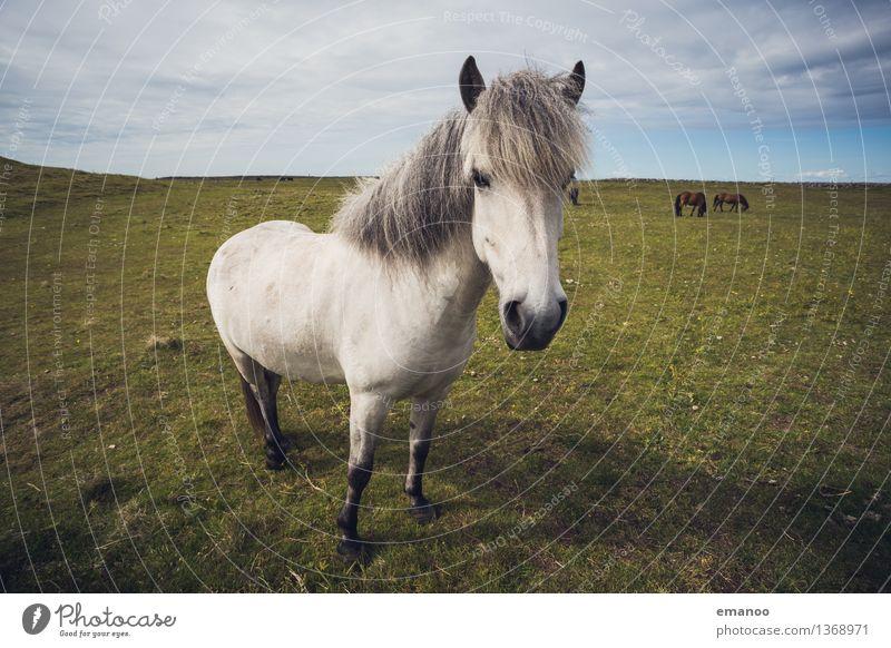 Alles Isi Ferien & Urlaub & Reisen schön weiß Landschaft Tier Gras lustig klein wild Feld wandern stehen Ausflug Neugier Pferd Weide