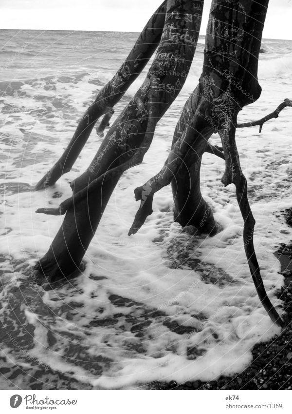 Lauf der Dinge weiß Baum Meer schwarz Wellen Ostsee