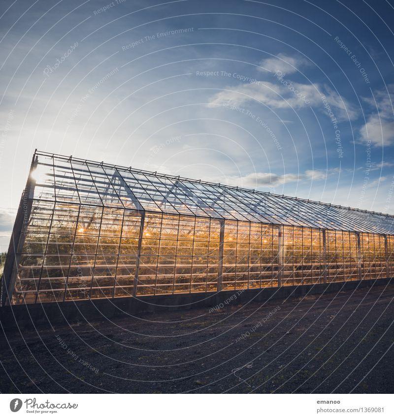 Glashaus Himmel Pflanze blau Haus Fenster gelb Wärme Lampe hell Energiewirtschaft Wachstum leuchten Technik & Technologie Zukunft Klima Industrie