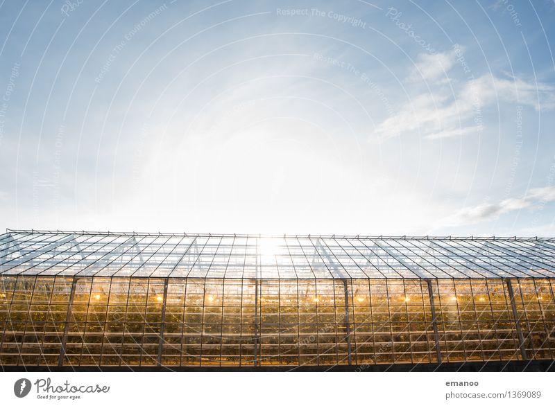 Wer im Glashaus leuchtet Himmel Natur Pflanze blau Fenster gelb Wärme Garten hell Energiewirtschaft Wachstum leuchten modern Technik & Technologie