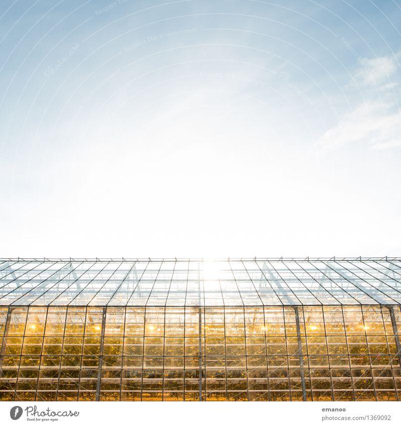 Glashaus Landwirtschaft Forstwirtschaft Industrie Energiewirtschaft Erneuerbare Energie Sonnenenergie Umwelt Natur Pflanze Himmel Klima Klimawandel Wetter
