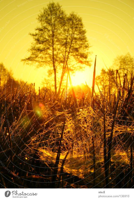 early morning | spinnennetz Stimmung Lampe Wiese Feld Ferne Sonnenaufgang Morgen Baum Baumkrone Blatt Horizont Silhouette schwarz Schatten verdunkeln Nebel