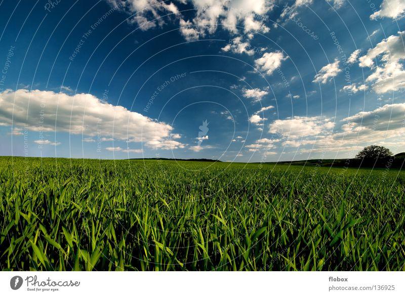Grün und Blau... II Natur grün Landschaft Horizont Feld Schönes Wetter Ackerbau blau malerisch himmelblau Wolkenhimmel Wolkenformation Wolkenfeld Wolkenfetzen