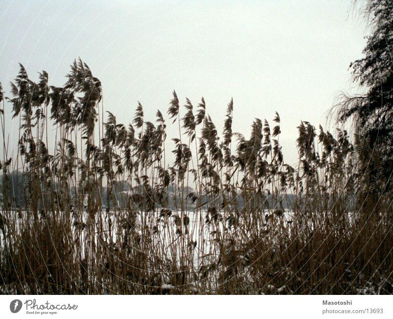 Alsterbüsche Natur Landschaft Wasser Sträucher alt Aussicht gebüsch strauch Gedeckte Farben Außenaufnahme Menschenleer Abend Zentralperspektive