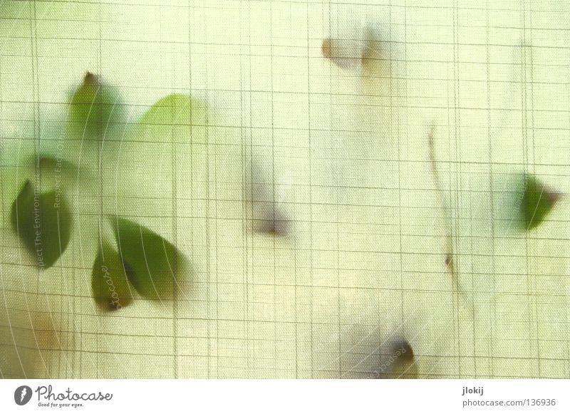 Andeutung Natur weiß grün Pflanze Blume Blatt Fenster Linie Wohnung Dekoration & Verzierung Stoff berühren Vorhang Material Gardine kariert