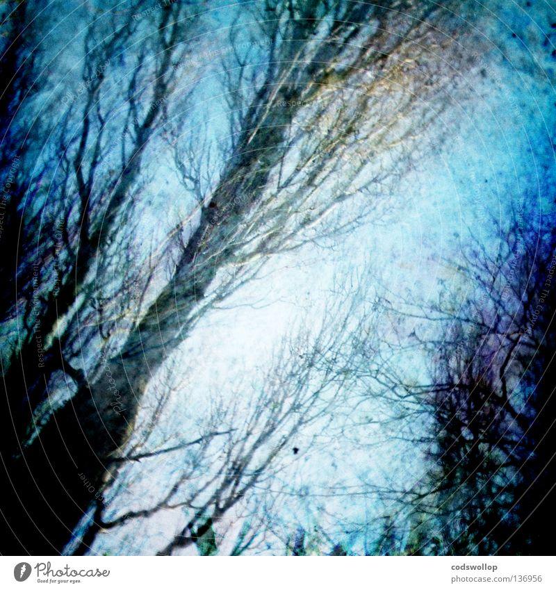 wildwood Himmel Wald Herbstlaub kalt Blatt Holzmehl Gewächshaus Baum Winter garden forest sky pond laubwerk blau branches foliage Ast trees blue marsh shadow
