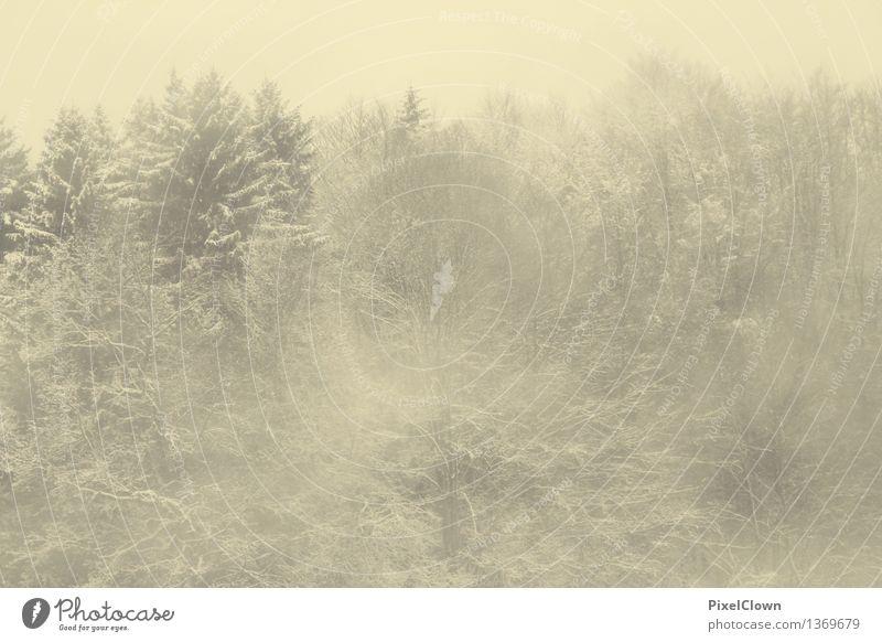 Wintereinbruch Ferien & Urlaub & Reisen weiß Baum Winter kalt Schnee Stimmung Schneefall trist Abenteuer Sturm bizarr Winterurlaub