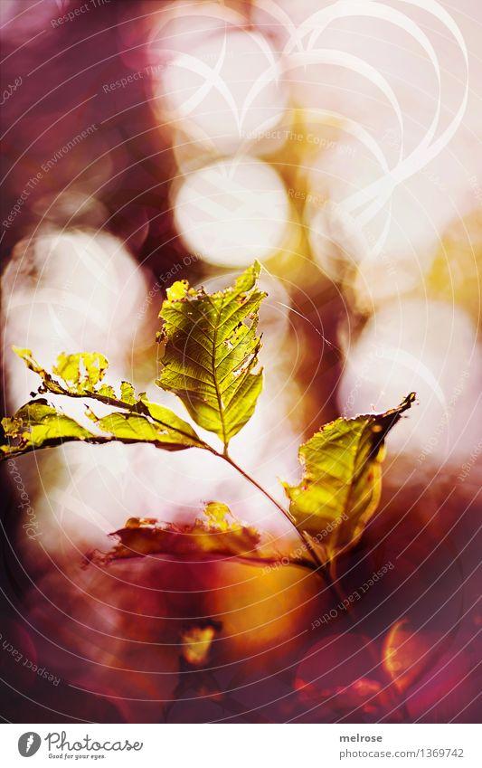 MIttwochsfunkeln Stil Design Natur Luft Herbst Schönes Wetter Sträucher Blatt Wildpflanze Herbstlaub Zweige u. Äste Feld Herbstfunkeln Herbstleuchten Bokeh