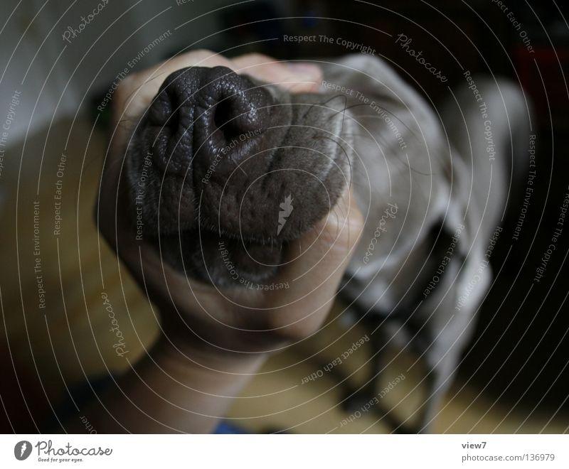 Schnauze halten! Hand grau Hund lustig Nase festhalten nah Wut eng Säugetier Haustier Ärger Schnauze Maul drücken quer