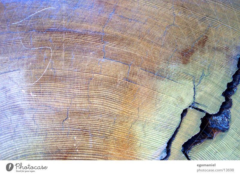 Mammutbaum Natur Baum Leben Holz Kreis Wachstum