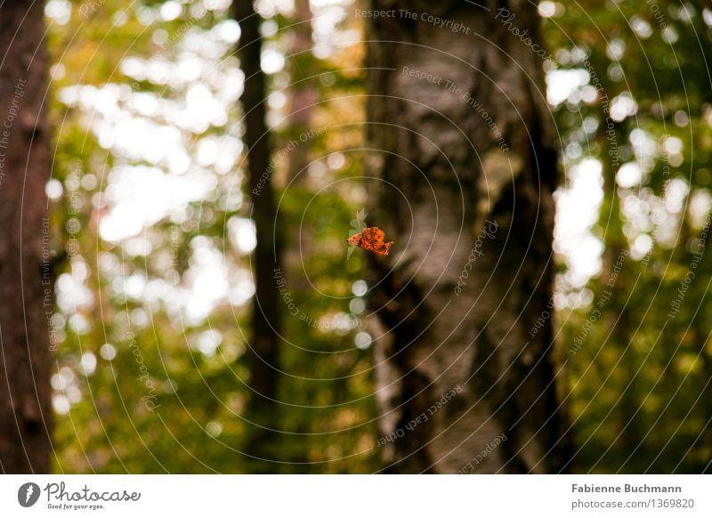 fallen leaves Natur Pflanze Herbst Baum Blatt Wildpflanze Wald Herbstwald Farbe Spinnennetz Birke Birkenblätter Menschenleer braun grün orange weiß Färbung