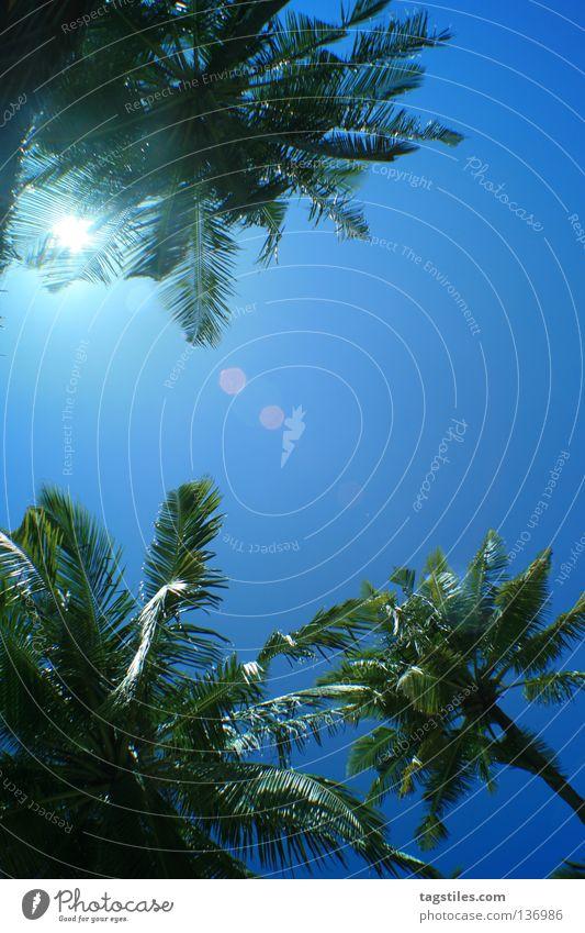 PALMEN IN BLAU Palme Malediven grün Sommer Sonne Sonnenstrahlen Ferien & Urlaub & Reisen Freizeit & Hobby Asien Palmenwedel Erholung blau Himmel liegen träumen