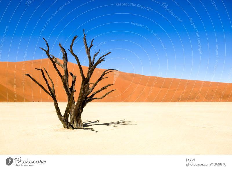 Gerippe Natur Landschaft Pflanze Sand Wolkenloser Himmel Dürre Baum Totholz Hügel Wüste Namib Düne Baumstamm Ast trocken demütig Tod Länder Namibia Nationalpark