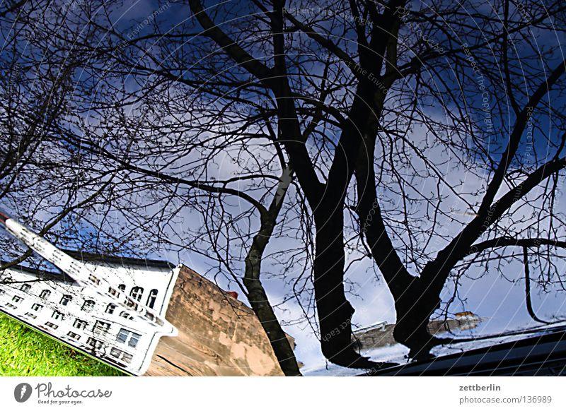 Real wirklich Baum himmelblau Haus Etage Wand Stadt Stadthaus verrückt Wölbung Reflexion & Spiegelung Architektur Schwäche Erde Ast Zweig Himmel Gebäude