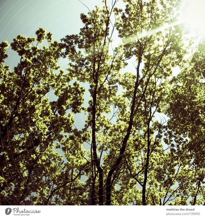 LEBENSBAUM Himmel Natur grün schön Baum Pflanze Sonne Sommer Tier Blatt Erholung gelb dunkel Graffiti Frühling springen