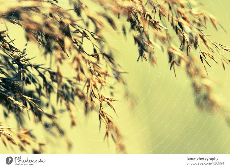 zart Natur Pflanze Erholung Umwelt Frühling Wiese Gras Küste klein See träumen Wind Perspektive zart Getreide Schilfrohr